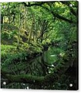 Glengarriff River, County Cork, Ireland Acrylic Print