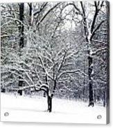 Glenna's Dogwood In The Snow Acrylic Print