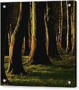 Glenville Woods, County Cork, Ireland Acrylic Print