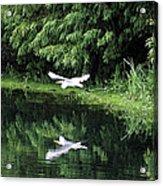 Gliding Through The Swamp Acrylic Print