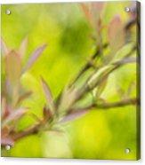 Glimpse Of Spring Acrylic Print