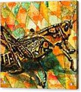 Glorious Grasshopper Acrylic Print