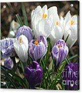 Glorious Spring Acrylic Print