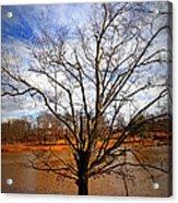 Glorious Tree Acrylic Print