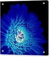 Glow Blue Acrylic Print