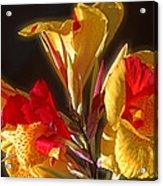 Glowing Iris Acrylic Print