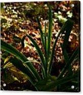Glowing Iris Plant 3 Acrylic Print