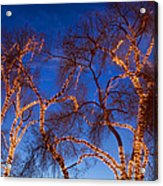 Glowing Trees Acrylic Print