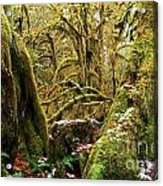 Gnomes In The Rainforest Acrylic Print