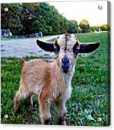 Goatee Acrylic Print