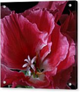 Godieta Flower Detail Acrylic Print