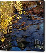 Gold And Blue Acrylic Print