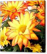 Gold And Red Autumn Mums Acrylic Print
