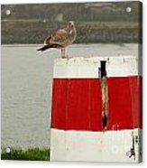 Gold Beach Gull Acrylic Print