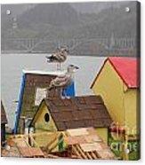 Gold Beach Gulls Acrylic Print