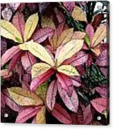 Gold Red And Purple Leaves Acrylic Print