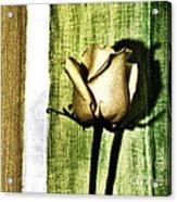 Gold Tulip Acrylic Print