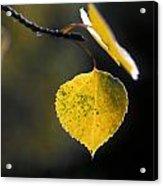 Golden Aspen Leaf Acrylic Print
