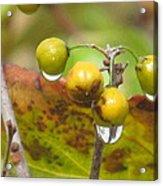 Golden Autumn Drops In Acrylic Print