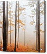 Golden Autumn Forest Acrylic Print