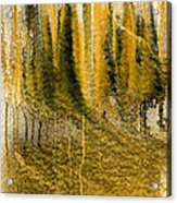 Golden Autumn Forest Acrylic Print