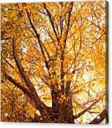 Golden Autumn View Acrylic Print