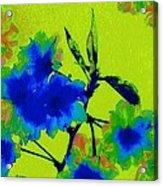 Golden Blossom Acrylic Print by Jen White