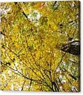 Golden Canopy Acrylic Print by Rick Berk