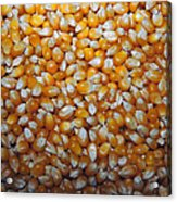 Golden Corn Acrylic Print