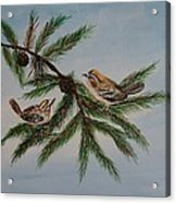 Golden Crowned Kinglets Acrylic Print