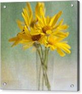Golden Daisies Acrylic Print