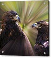 Golden Eagles Acrylic Print