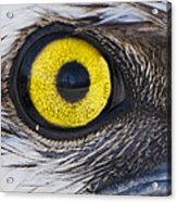 Golden Eye Acrylic Print