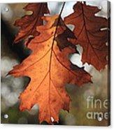 Golden Fall Leave's Close Up Acrylic Print