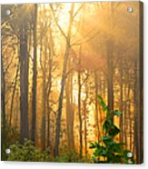 Golden Fog Thru The Trees Acrylic Print