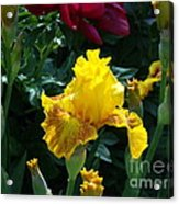 Golden Glory Acrylic Print by Donna Parlow