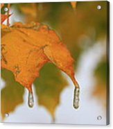 Golden Leaves Silvery Drops Acrylic Print