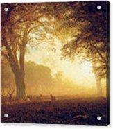 Golden Light Of California Acrylic Print