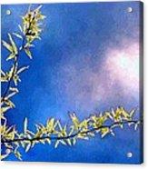 Golden Locust Acrylic Print