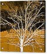 Golden Magical Tree Acrylic Print