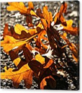 Golden Oak Shadows Acrylic Print