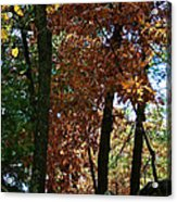 Golden Oak Acrylic Print
