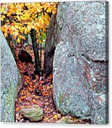 Golden Oak Through Boulders At Elephant Rocks State Park Acrylic Print