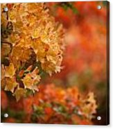 Golden Orange Radiance Acrylic Print