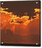 Golden Orange V5 Acrylic Print