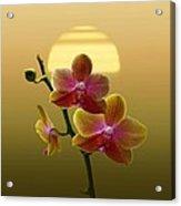 Golden Orchid Sunset Acrylic Print