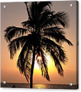 Golden Palm Acrylic Print