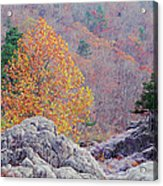 Golden Poplar Among The Rocks At Johnsons Shut Ins State Park Acrylic Print