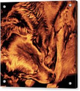 Golden Retriever In Leather Chair Variation 2 Acrylic Print