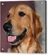 Golden Retriever Acrylic Print